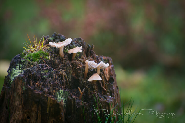 Mushrooms in the Sherwood Forest