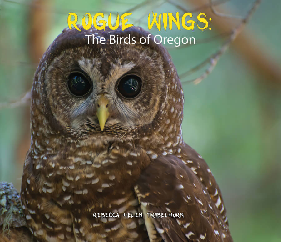 Rogue Wings: Oregon Birds Natural History