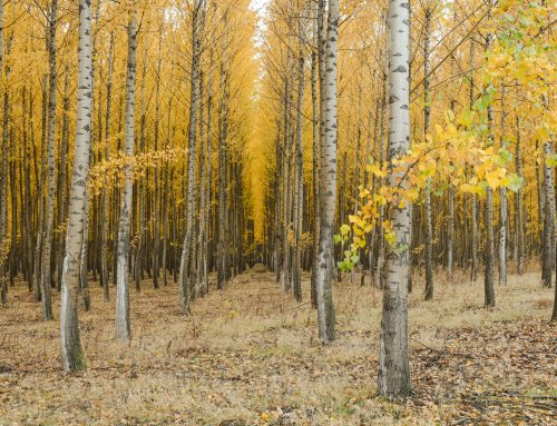 10 Highly Effective Tips for Fall Photography